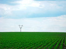 grön himmel för fält Fotografering för Bildbyråer