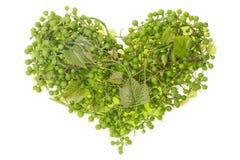 grön hjärta för druvor Royaltyfri Fotografi