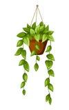 Grön houseplant i en kruka också vektor för coreldrawillustration Fotografering för Bildbyråer