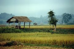 grön hsipaw myanmar för fält Arkivfoto