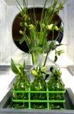 grön inre livstid royaltyfri bild