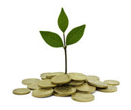 grön investering Royaltyfria Bilder