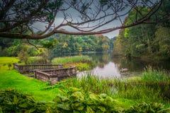 Grön irländsk lakeside Royaltyfria Bilder