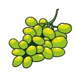Grön isolerade drog frukter för druvor hand Fotografering för Bildbyråer