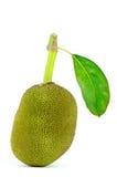 grön jackfruit Arkivbild