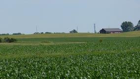 Grön jordbruksmark i sommar Arkivfoto