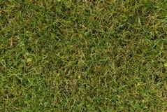 grön jordningssikt för gräs Fotografering för Bildbyråer