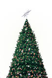Grön jultree Royaltyfri Bild
