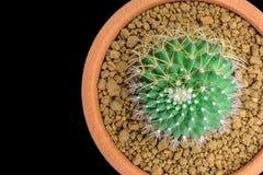 Grön kaktus Royaltyfri Bild