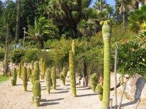 Grön kaktus Royaltyfri Fotografi