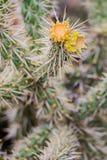 Grön kaktus med gula spetsar arkivbilder