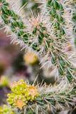 Grön kaktus med gula spetsar royaltyfria bilder