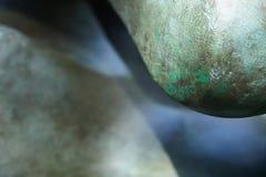 Grön kaktusväxt med den fullvuxna läderremmen Arkivbilder