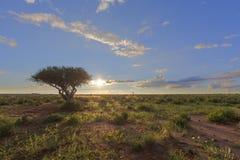 Grön Kalahari solnedgång Fotografering för Bildbyråer