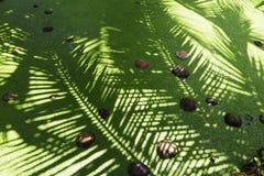 Grön kanal med kokosnöten i Thailand arkivfoton