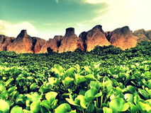 Grön kanjon Royaltyfri Foto