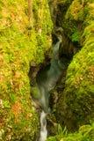 Grön kanjon av floden Mostnica Fotografering för Bildbyråer