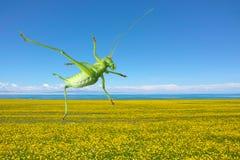 grön katydid Arkivfoto