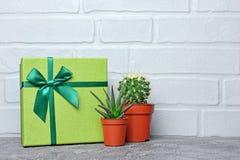 Grön klassisk gåvaask med satängpilbågen och små kakturs i röda blomkrukor royaltyfri foto