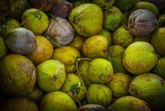 Grön kokosnöt Arkivfoton