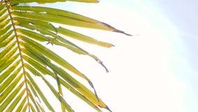Grön kokosnötpalmblad mot blå himmel och ljus solbakgrundslängd i fot räknat Begrepp för ferie för sommarturismsemester 4K stock video