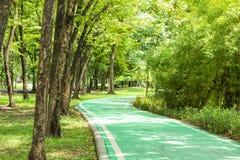 Grön konkret väg för cyklar och träd royaltyfria bilder