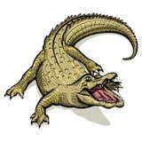 Grön krokodil för tecknad film Royaltyfri Bild
