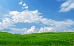 grön kull för gräs Arkivfoton
