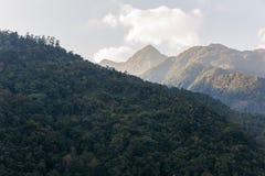 Grön kulle nära det Kangchenjunga berget med moln över och träd som beskådar på vägen i aftonen i norr Sikkim, Indien Royaltyfri Bild