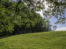 Grön kulle som inramas av buskar och filialer arkivbild
