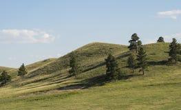 grön kullrullning arkivbild