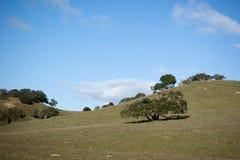 grön kullrullning Arkivfoto