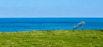 Grön kust - Brittany, Frankrike Fotografering för Bildbyråer