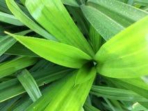 Grön lång leaf Royaltyfri Bild