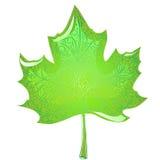 Grön lönnlöv Royaltyfria Foton