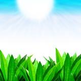 Grön lövrik gräns med soliga blåa himlar Royaltyfri Bild