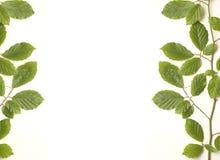 Grön lövrik ram arkivfoto
