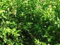 grön lövrik växt Arkivbilder