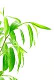 grön lövrik växt Arkivfoto