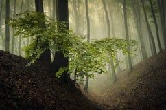 Grön lövverk i skog med dimma Royaltyfria Bilder