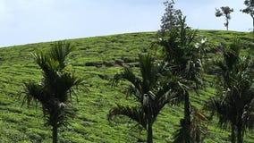Grön lövverk och ett blått berg i Indien arkivfilmer