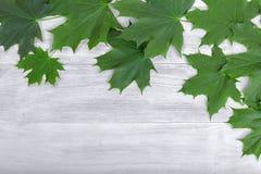Grön lövverk på en grå träbakgrund Blad på en tabell druvan för konstbakgrundsramen låter vara den paper texturvattenfärgen Förbl arkivbild