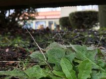 Grön lövverk på jordningen Royaltyfria Foton