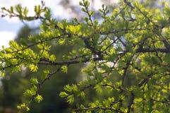 Grön lövverk på trädfilial mot bakgrund field bl?a oklarheter f?r gr?n vitt wispy natursky f?r gr?s arkivbilder