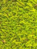 Grön lövverkbakgrund Royaltyfria Bilder