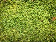 Grön lövverkmodell Arkivfoto