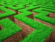 Grön labyrint Arkivbilder