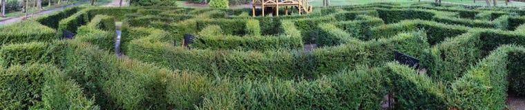 Grön labyrint Arkivfoton