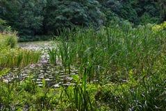grön lake Arkivfoto