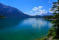 grön lake Royaltyfria Bilder